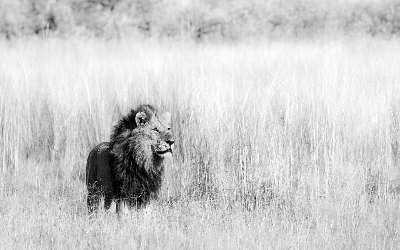 Safari Scapes Unlock Africa 03
