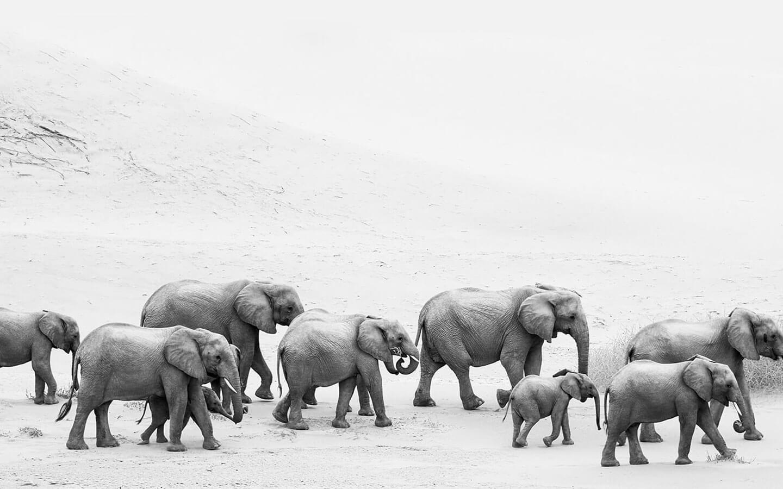 Safari Scapes Unlock Africa 01